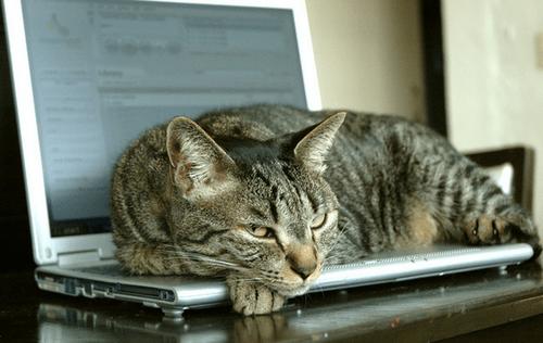 Кот-защитник на ноутбуке