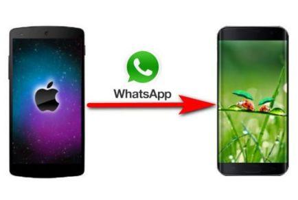 Как правильно перенести WhatsApp с iPhone на Android